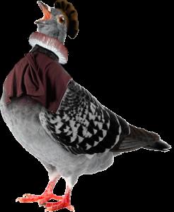pigeon_2014